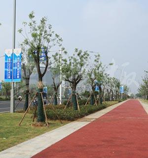 南京高淳区双高路非机动车道