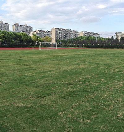 天然草足球场
